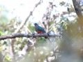 quetzal-eared-2-13-09