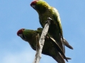 tb-parrot4