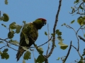 tb-parrot2