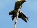 tb-parrot3