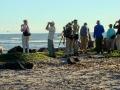 beach-birding
