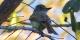 Flamulated Flycatcher copy