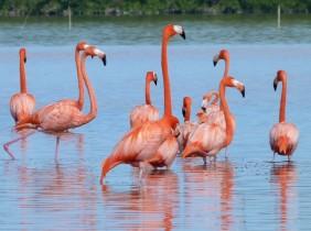 We got really close to the Flamingos
